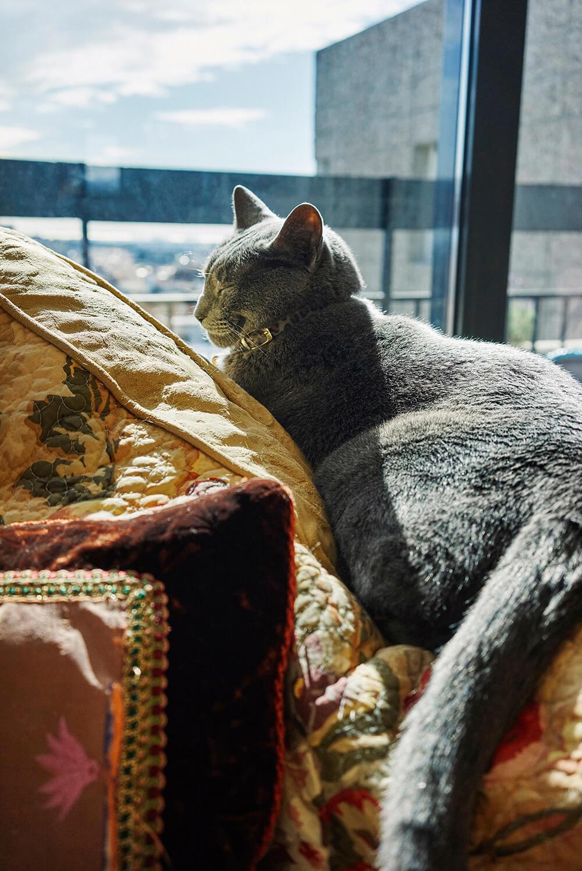 Jeff Gothelf's cat